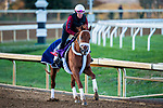 November 3, 2020: Vekoma, trained by trainer George Weaver, exercises in preparation for the Breeders' Cup Sprint at Keeneland Racetrack in Lexington, Kentucky on November 3, 2020. Jon Durr/Eclipse Sportswire/Breeders Cup