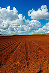 The red soil, sugarcane Country, Queensland, Australia.