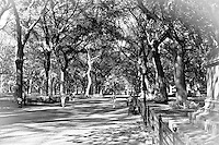 A back and white view of a stroll in Central Park in New York City