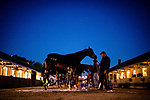 LOUISVILLE, KENTUCKY - MAY 02: Always Dreaming, gets a bath after exercising in preparation for the Kentucky Derby at Churchill Downs on May 2, 2017 in Louisville, Kentucky. (Photo by Douglas DeFelice/Eclipse Sportswire/Getty Images)
