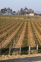 Vineyard. Chateau Balestard la Tonnelle, Saint Emilion, Bordeaux, France