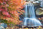 Waterfall in residential back yard with striking fall color of Japanese maple.