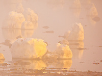 Ice floating in the water of Hudson Bay at sunset