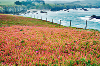 Iceplants, fence and ocean at Duncan Park. Sonoma Coast State Beach. California