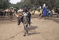 Near Akadaney, Niger - Fulani Girl with Cow Drawing Water