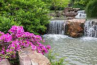 Yangzhou, Jiangsu, China.  Flowing Stream and Azaleas in the Flower Garden in the Slender West Lake Park.