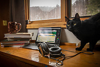 Lawrence the cat helps UAA Advancement Chief Photographer as he works from home during the COVID-19 pandemic.