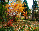Nature, Landscapes, night stars, night skies, autumn, leaves, hawk