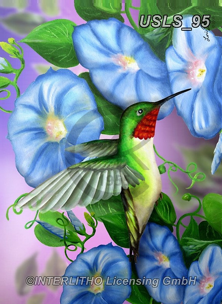 Lori, REALISTIC ANIMALS, REALISTISCHE TIERE, ANIMALES REALISTICOS, zeich, paintings+++++2-HumingbirdMorningGlories,USLS95,#a#, EVERYDAY ,puzzle,puzzles