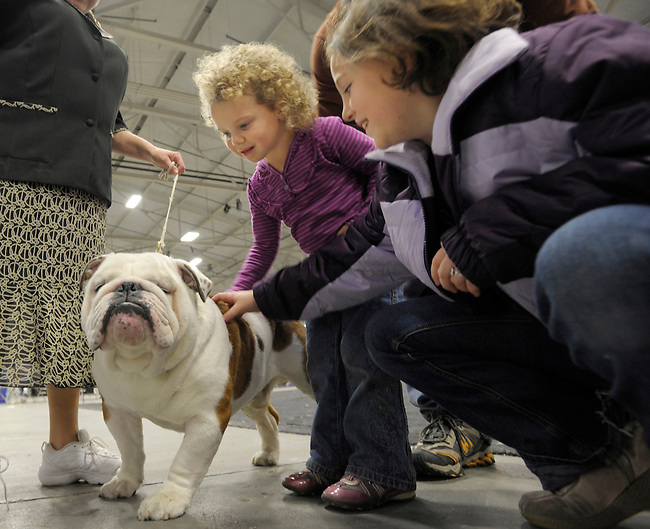 An English Bulldog named Mouse, left, is admired by KAira LAwson, center and Danielle Wilson, right, at the Kennel Club of Philadelphia Dog Show Saturday, Nov. 14, 2009 in Oaks, Pa. (AP Photo/Bradley C Bower)