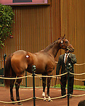 12 September 2010.  Hip #25 Pulpit - Chimichurri filly sold for $450,000 at the Keeneland September Yearling Sale.   Consigned by Warrendale Sales.
