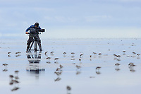 Cinematographer Eric Liner filming shorebirds with a Sony HD  camera on a Cornell Lab of Ornithology expedition. Yukon Delta National Wildlife Refuge, Alaska.