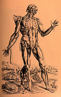 """Science:  Vesalius--The fifth """"Muscle Man"""".  FABRICA 1555 edition.  Photo '84."""