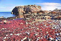 SC - Prov. MORAY- FINDOCHTY<br /> Red seaweed on the beach of the little fishing village<br /> <br /> Full size: 69,3 MB