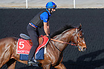 March 25, 2021: Dubai World Cup contender Magny Cours trains on the track for trainer Andre Fabre at Meydan Racecourse, Dubai, UAE.<br />
