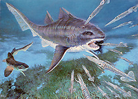 illustration, Hybodus and Paleospinax, is one of the most recent ancestors of an evolutionary model of the modern shark, the advanced jaw suspension gives the 2 meter long Hybodus a modern appearance, it lived in the seas in the Early Jurassic, 180 MYA, some types of Hybodus sharks would enter freshwater, prehistoric sharks