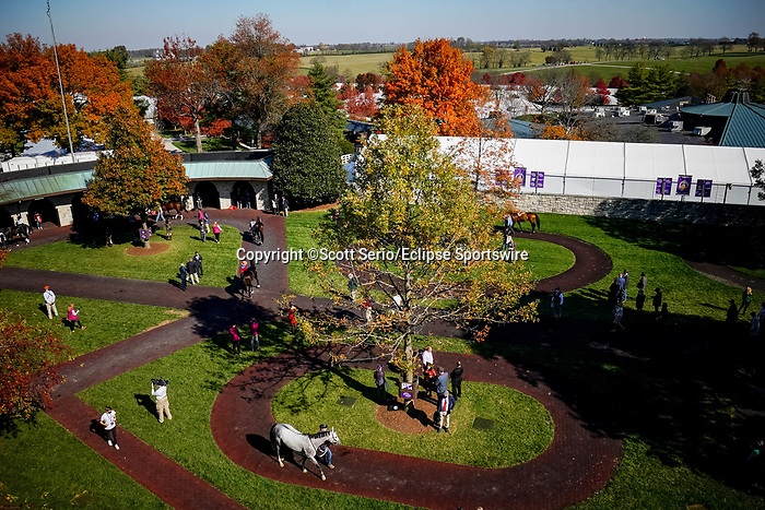 November 6, 2020: Horses are walked through the paddock at Keeneland Racetrack in Lexington, Kentucky, on Friday, November 6, 2020. Scott Serio/Eclipse Sportswire/Breeders Cup/CSM