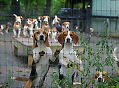 Hounds pose for picture at Foxfield.