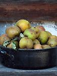 Deutschland, Bayern, Oberbayern, Chiemgau, Sachrang: gepflueckte Aepfel von der Streuobstwiese | Germany, Upper Bavaria, Chiemgau, Sachrang: gathered apples from a traditional orchard
