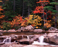Fall color along the Swift River in the White Mountain National Forest. New Hampshire.