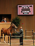 Hip #203 Quiet Giant consigned by Lane's End, agent for the complete Dispersal of the Estate of Edward P. Evans (Spring Hill Farm) sold for $3,000,000 to Besilu Stables at the Keeneland November Sale on November 7, 2011.