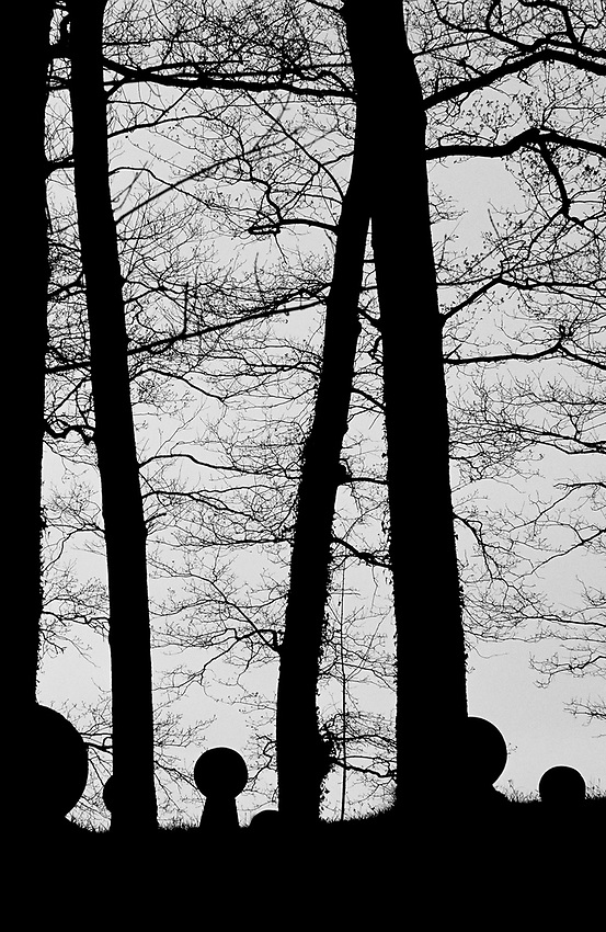 Bakartasun uneak - Solitary moments. Basque Country..Forest. Photo: Ander Gillenea.