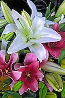 Flores. Lírio (Lilium pumilum). SP. Foto de Manuel Lourenço.