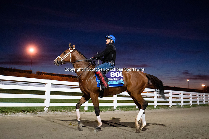 November 5, 2020: Abarta, trained by trainer Brad Cox, walks around Keeneland Racetrack in Lexington, Kentucky on November 5, 2020. Scott Serio/Eclipse Sportswire/Breeders Cup/CSM