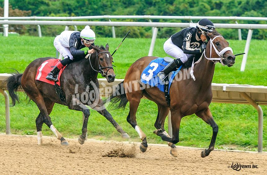 R Averie Lynn winning at Delaware Park on 10/6/21