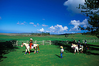 Lanai city community preparing for festival parade with horses in open pasture