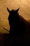 DEL MAR,CA-AUGUST 20: California Chrome is at the barn after winning the TVG Pacific Classic at Del Mar Race Track on August 20,2016 in Del Mar,California (Photo by Kaz Ishida/Eclipse Sportswire/Getty Images)