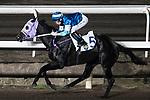 Jockey Jack Wong Ho-nam riding Mythical Emperor during the race number 6 at Sha Tin racecourse on November 1, 2017 in Hong Kong, China. Photo by Marcio Machado / Power Sport Images