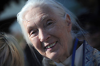 NEW YORK, NY - SEPTEMBER 19: Jane Goodall  attends the ceremony where United Nations Secretary General Ban Ki-moon rings the Peace Bell at the United Nations in New York on September 19 2014 in New York City.<br /> <br /> <br /> People:  Jane Goodall<br /> <br /> Transmission Ref:  MNC1<br /> <br /> Must call if interested<br /> Michael Storms<br /> Storms Media Group Inc.<br /> 305-632-3400 - Cell<br /> 305-513-5783 - Fax<br /> MikeStorm@aol.com<br /> www.StormsMediaGroup.com