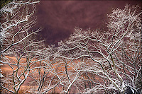 Snow-covered trees in Central Park at late night.