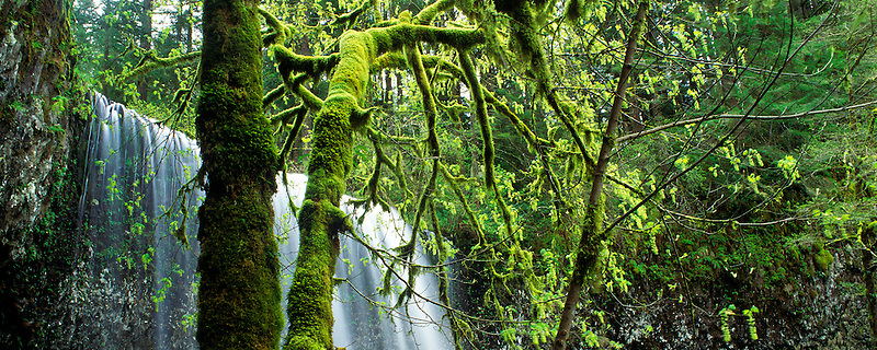 Lower South Falls. Silver Falls State Park. Oregon.