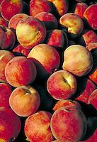 A pile of reddish orange ripe peaches Orange, reddish orange, with bits of yellow, round fruits, juicy, garden, summer, fruit, tasty, fresh, flavorful, health food, agriculture, farming, peachy.