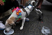A dog, paraplegic and blind of one eye, dressed in carnival costumes take part in the animals carnival, Copacabana, Brazil, February 3, 2013. (Austral Foto/Renzo Gostoli).