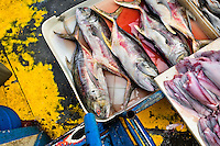 Fresh tuna fish for sale are seen at Mercado de Mariscos seafood and fish market in Panama City, Panama, 1 February 2015.