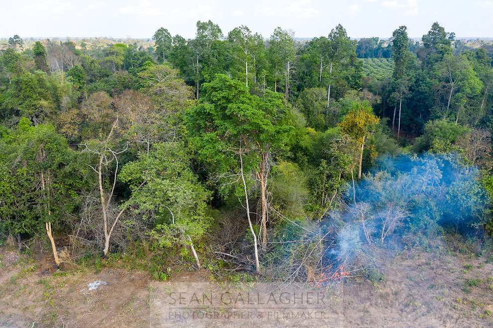 A small fire burns on the edge of the forest in the Beng Per Wildlife Sanctuary, in northern Cambodia. The sanctuary is a sanctuary in name only, as most of the land has been sold by the government for agricultural concessions. The South East Asian country has one of the fastest rates of deforestation in the world and it is estimated only 3% of primary forest is left throughout the country. Forest clearance is fuelled by demand for agricultural land and high value species of tree for the Asian furniture market.