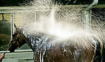 June 19, 2020: A horse gets a bath after exercising as horses prepare for the Belmont Stakes at Belmont Park in Elmont, New York. Scott Serio/Eclipse Sportswire/CSM