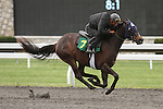 April 03, 2014: Hip 7 Speightstown - Miss Hot Salsa consigned by Secure Investments worked 1/8 in 10:2. Candice Chavez/ESW/CSM