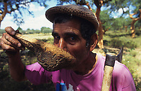 PORTUGAL, Alentejo, worker peel the bark of cork tree, every 7 years the bark of a tree can removed for production of cork stopper and flooring products, worker drinks water from traditional cork cup / PORTUGAL, Alentejo, Landarbeiter bei Schaelung von Korkeichen, alle 7 Jahre kann die Rinde deer Korkeiche geschaelt werden, aus der Korkrinde werden Flaschenkorken und Fussbodenbelege hergestellt