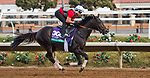 DEL MAR, CA - OCTOBER 02: Beach Patrol, owned by James Covello, Sheep Pond Partners & Head of Plains Partners LLC and trained by Chad C. Brown, exercises in preparation for Longines Breeders' Cup Turf at Del Mar Thoroughbred Club on November 2, 2017 in Del Mar, California. (Photo by Anna Purdy/Eclipse Sportswire/Breeders Cup)