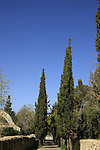 Israel, Jezreel valley. Cypress trees in front of the Franciscan Church of the Transfiguration on Mount Tabor