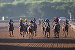 ARCADIA, CA - NOVEMBER 05: Finest City #12 (black), ridden by Mike Smith, wins the Breeders' Cup Filly & Marie Sprint during day two of the 2016 Breeders' Cup World Championships at Santa Anita Park on November 5, 2016 in Arcadia, California. (Photo by Kaz Ishida/Eclipse Sportswire/Breeders Cup)