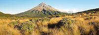 Alpine vegetation and Taranaki, Mt. Egmont, Egmont National Park, North Island, New Zealand, NZ