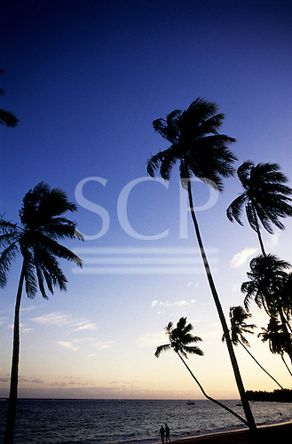Itaparica Island, Brazil. Palm trees blowing in the wind.
