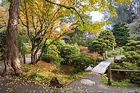 Japanese Tea Garden in Golden Gate Park, San Francisco, California. Bridge across pond.