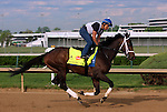 LOUISVILLE, KY - APRIL 25: Dazzling Gem (Misremembered x Dazzling, by Vindication) gallops on the track at Churchill Downs in preparation for the Kentucky Derby. Owner Steve Landers Racing LLC, trainer Brad H. Cox. (Photo by Mary M. Meek/Eclipse Sportswire/Getty Images)