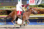 Sweet N Discreet with jockey Joe Bravo on board wins the Florida Sunshine Millions Distaff at  Gulfstream Park, Hallandale Beach, Florida 01-18-2014